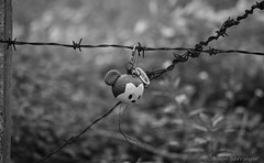 on a wire (steve: they can't all be zingers!!! (primus)) Tags: sonya7r canonfd100mmf28ssc sony monochrome bw blackwhite blackandwhite primelens primecanonlens 100mm