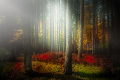 Magic forest and the 7 trees (max tuta noronha) Tags: outono fall autumn painting dreamscape landscape colorsscape yesterday ontem blue red yellow rgb happy
