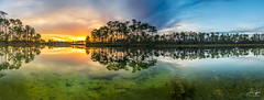 Reflected Pines (J.Coffman Photography) Tags: big cypress everglades national park landscape trees swamp water reflections florida united states forest clouds nikon d810 hike hiking wilderness sunshine fl state preserve wet season sunset sky tree lake grass flamingo long pine key
