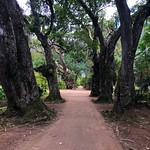 Jardim Botânico do Rio de Janeiro thumbnail