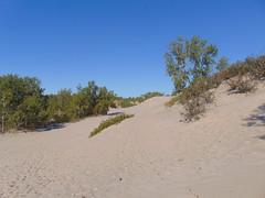 Sandbanks Dunes (2) (Quevillon) Tags: park sandbanksprovincialpark ontarioparks westlake athol sandbanksdunesbeach dunes canada ontario easternontario centreontario princeedwardcounty isleofquinte