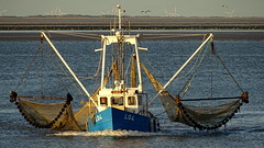 LAUWERSOOG, THE NETHERLANDS (pwitterholt) Tags: shrimper garnalenvisser fishingboat vissersboot netten nets lauwersoog wadden waddenzee sunset sunlight zonsondergang zonlicht avond avondlicht avondzon eveninglight evening sony sonyhx400 sonycybershot groningen meeuwen gull lowtide eb prawn harbour haven port