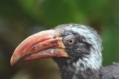 Oiseau (vanregemoorter) Tags: birds zoo bokeh oiseau animal