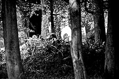Sanctuary in Woods  Monochrome (brianarchie65) Tags: rowley rowleyestate rowleychurch eastyorkshire eastridingofyorkshire yorkshirecameraramblers yorkshireblackandwhite watertower church sky fields woods unlimitedphotos ngc monochrome blackandwhite blackandwhitephotos blackandwhitephoto blackandwhitephotography blackwhite123 blackwhiterealms flickrunofficial flickr flickruk flickrcentral flickrinternational ukflickr canoneos600d geotagged brianarchie65