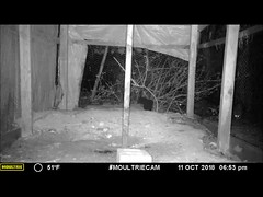 Raccoons In The Chicken Coop (RonG58) Tags: raccoons chickencoop moultrie trailcam gamecameras moultriem50i trailcamera moultriecam waynemaine maine rong58 new usa images summer animals mammals wildlife alive video infraredcamera