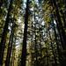 Cape Falcon Trail 1