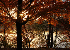 Fall morning over Hyland Lake_51 (Scott_Knight) Tags: fall sunrise minnesota canon scott knight water nature outdoors sun trees lake