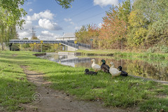 _IMG8121 CR (Pete.L .Hawkins Photography) Tags: autumnal walk sheffield tinsley 28th oct 2018 towpath canal blue skies autumn colours pentax k1 hd pentaxd fa 1530mm f28 ed sdm wr