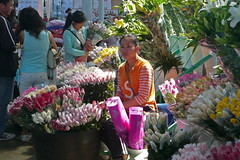 On the Flower Wholesale Market in Kunming (Wolfgang Bazer) Tags: flower wholesale market blumengrosmarkt flowers blumen markt kunming yunnan china