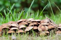 Baarland (Omroep Zeeland) Tags: herfst paddestoelen baarland begraafplaats