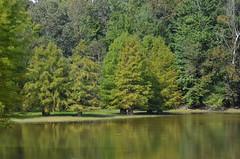 Cypress Trees _2020 (Porch Dog) Tags: 2018 garywhittington nikond7000 nikkor18300 outdoors nature kentucky fall october cypresstrees lbl betweentherivers landbetweenthelakes