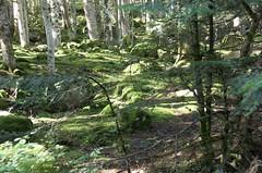 Bosc a l'Alt Àneu, Pallars Sobirà, Catalunya. (heraldeixample) Tags: heraldeixample bcn son sondepi altaneu aneu pallars pirineu pirineo pyrenees spain espanya españa spanien catalunya catalonia cataluña catalogne catalogna bosc forest bosque forêt wald foresta skov floresta ngc albertdelahoz