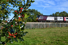 Evergreens on the Lickey (robmcrorie) Tags: holly bush berries red hst class 43 cross country trains inter city 125 nikon d850 lickey bank incline burbot pike pool worcestershire train rail railway railfan loco