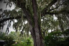 Magnolia Plantation, Charleston, SC (rowebal) Tags: charleston southcarolina southern charms beautiful magnolia plantation green photography lights landscape