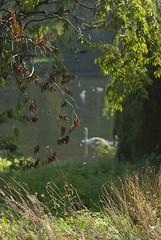 Passing by (dwimagesolutions) Tags: england london stjamespark autumn indiansummer nikond200 nikkor85mmf18g