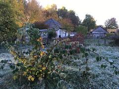 Ukrainian village (genekorol) Tags: village ukraine sunrise forest hut frost grass yard