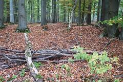Herbstwanderung bei Wetzlar, Hessen/Deutschland (10/2018) (Migathgi) Tags: herbst 2018 migathgi wetzlar wald