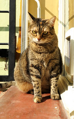 "Alice: ""Stop taking pictures, dad"" (Alfredo Liverani) Tags: canong5x canon g5x pointandshoot point shoot ps flickrdigital flickr digital camera cameras europa europe italia italy italien italie emiliaromagna romagna faenza faventia faience animal kitten gatto gatta gatti gatte cat cats chats chat katze katzen gato gatos pet pets tabby furry kitty moggy moggies gattino animale ininterni animaledomestico aliceellen alice ellen caturday happycaturday happy imhere 2932018 project365293 project36510202018 project36520oct18 oneaday photoaday pictureaday project365 project project2018 2018pad"