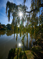 (Splat Photo) Tags: sheffield park gardens sussex national trust lake water trees autumn f22 starburst sony a7iii a7m3 sel1224g 1224 1224f4 1224mm 12mm ilce7m3