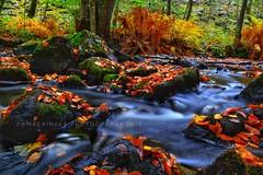 Autumn stream - Söderåsens Nationalpark (Amberinsea Photography) Tags: stream brook water autumn forest söderåsen nationalpark amberinseaphotography sweden longexposure nikon nature naturephotography