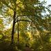 Through Autumn Trees 5716