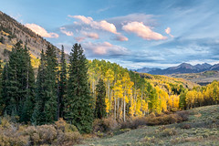 Aspens and Spruce (Kirk Lougheed) Tags: colorado lastdollarroad populustremuloides sanjuanmountains sanmiguelcounty usa unitedstates aspen autumn cloud fall forest landscape mountain mountainside outdoor sky spruce tree