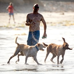 Play (GavinZ) Tags: california sandiego sports surfing beach ocean dog dogs play splash water