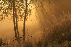 IMG_7521 The Isa Valley (MariuszWicik) Tags: forest mist tree grass wood canoneos5dmarkii lens polish poland polska autumn