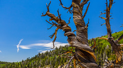 What You'd Expect to See (Dan at ProPeak - Thanks for 1.5M views!) Tags: america bark blue blueskies bluesky bouldermountain boxdeathhollowwilderness clouds deadtree dixienationalforest forest green hellsbackboneridge krummholztree landscape nature northamerica orange panorama scenicbyway spring texture touristattraction travel traveldestination travelandtourism tree trees usa unitedstates utah yellow escalante us