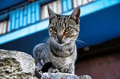 Gato en Fuentedey 3 (J.A.Glz) Tags: sony 18250 gato fuentedey tamron
