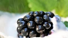 blackberry with yogurt and mint (norbert.wegner) Tags: macromondays bfood