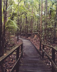 #jungle #borneo #travel #asia (petratutterova) Tags: jungle borneo travel asia