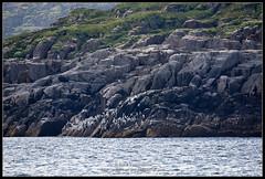 2018_июль_Поной_3_108 (Snowman_pro) Tags: flight kolapeninsula nord sea summer water вода кольскийполуостров лето море полёт сосновка белоеморе whitesea