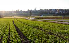 Herbst in Aufkirchen (lichtauf35) Tags: 24l 50d landscape intothelight lightslines bavaria autumn2018 sunshine flares road green light lightroom lichtauf35