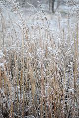 28834090 (aniaerm) Tags: snow ice frost