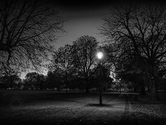Dusk Over The Common (Edmond Terakopian) Tags: night dailylife london tree lamppost streetlight ealingcommon streetphotography park lowlight streetlamp light dusk silverefexpro niksoftware bw monochrome blackandwhite fineart landscape m43 mirrorless gx9 lumix