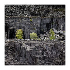 Dinorwig Three (Andi Campbell-Jones) Tags: andi andicampbelljonescom campbelljones photography dinorwig tress quarry slate north wales snowdonia nation park