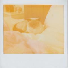 Hello Daddy (ifleming) Tags: expiredfilm polaroidsofttone polaroid1200si polaroidspectra polaroid cat