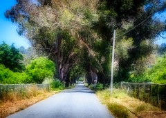 Tree Tunnel on Stage Road 2 (CDay DaytimeStudios w/1,000,000 views) Tags: bluesky california countryroad countryside pacificcoast pacificcoasthighway road sanmateocoast sanmateocounty stageroad trees