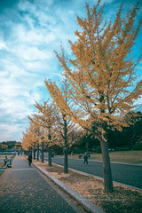 排排站 (湯小米) Tags: canon 1dx ef24105mmf4lis 銀杏 日本 japan 昭和記念公園 楓葉 autumn 秋天 maple plant 樹 公園 東京 tokyo