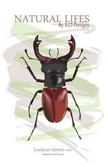 Lucanus cervus (ILO CG ART) Tags: illustration drawing cgart cgi graphicdesign diseñográfico ilustración nature naturaleza insectos insect color ilodesigns wildlife animals animal lucanuscervus spain españa dibujo