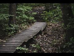 Through the Woods (Rick DeCosta) Tags: borderland state park easton massachusetts rick decosta new england pathways shutter island