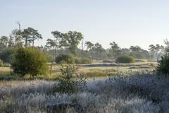 _IMG2418 (Henk de Regt) Tags: the netherlands gelderland natuur nature landscape grass bos forest trees zonsopkomst sunset sundown zonsondergang swamp nederland veluwe landschap gras water bomen moeras