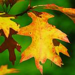 IMG_0746 thumbnail