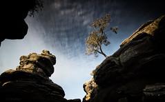Beyond the veil (-- Q --) Tags: northyorkshire brimhamrocks summerbridge nationaltrust lonelytree clouds sky rocks leefilters marumidhgcpl qthompson