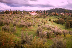Olive trees (RobMenting) Tags: 70d eos tuscany landscape travel italy europe city firenze italia canon italië florence canoneos70d toscana it