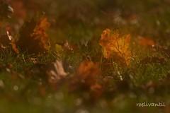 Herfst/Autumn (roelivtil) Tags: autumncolors herfstkleuren doubleexposure blad leaves