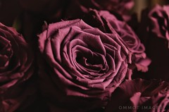 Flower power. (Steve.T.) Tags: flower flowers lowlight softlight lowkey petals nikon d7200 sigma18200 vaseofflowers pink rose roses nature naturallight availablelight