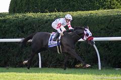 Striding Out (Casey Lynn Photos) Tags: 2018copyright horse racing horseracing horserace horseracingnation canon canon7dmii canonphotography canonusa tamron tamronlens keeneland kentucky lexington breederscup turf