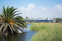 Surfliner Passing The Buena Vista Lagoon (PNW Rails Photography) Tags: oceanside california unitedstates surfliner amtrak emd f59phi amtk commuter train buena vista lagoon scenery palm tree